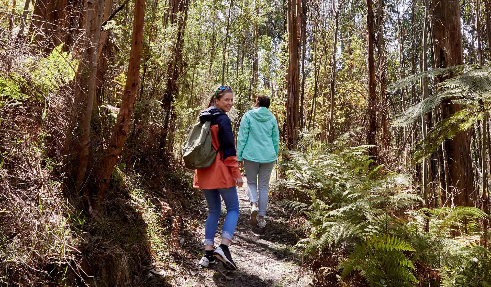 Two women walk through ferns along the Shelly Harris Track in Kinglake National Park.