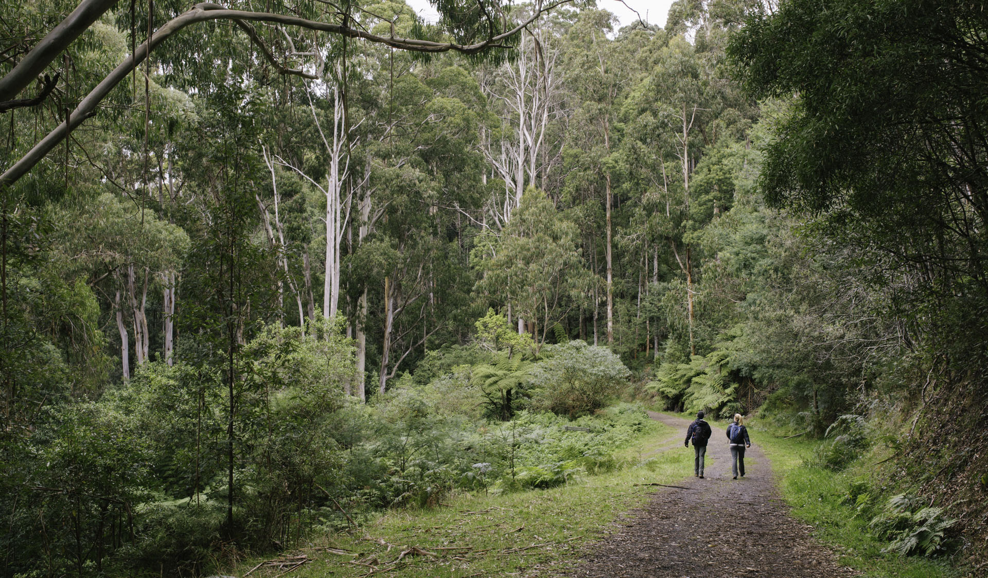 Two people walking along a wide path surrounded by trees and undergrowth at RJ Hamer Arboretum