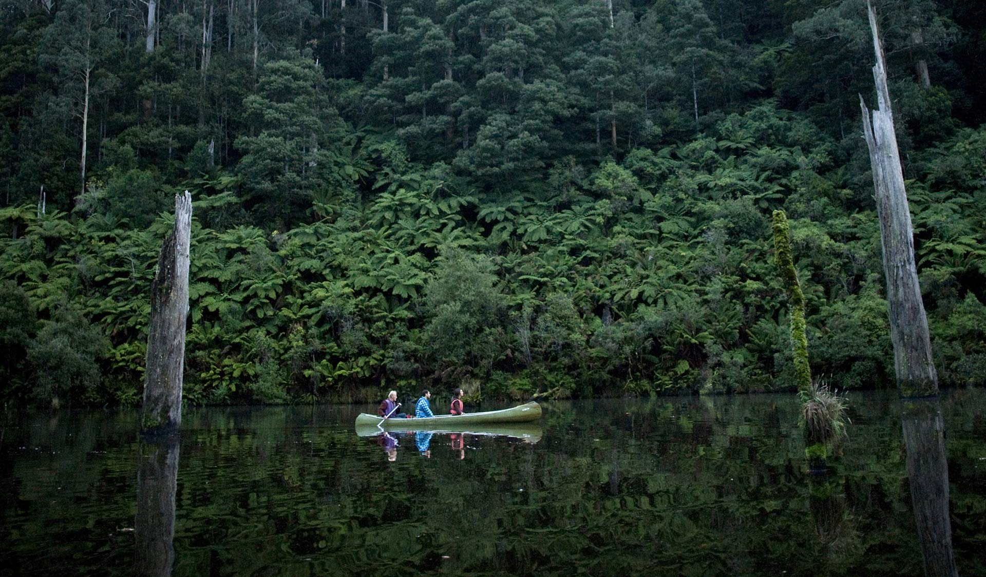 Three friends canoe through Lake Elizabeth infront of a back drop of ferns and old growth forest.