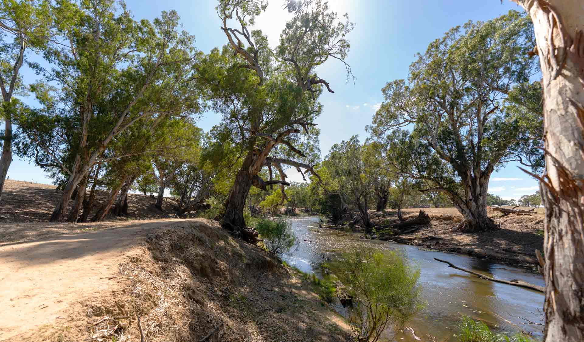 River red gums line the Campaspe River at Rocky Crossing at Greater Bendigo National Park