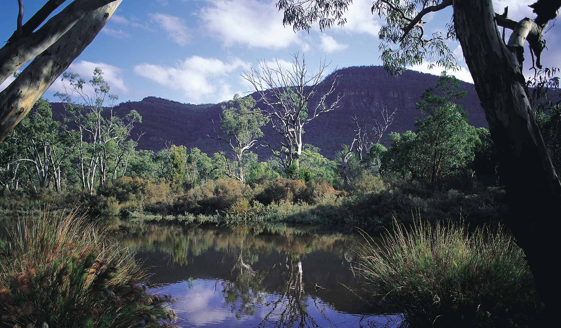 A lush wetland scene found in the central Grampians.