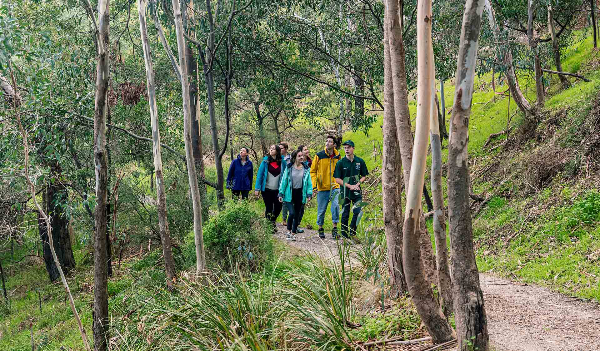 A ground take a volunteer led tour through the Flying Fox environments on the banks of the Yarra River in Yarra Bend Park