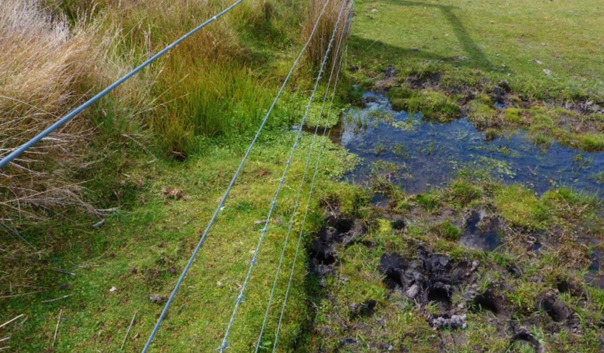 Alpine National Park exclusion plot showing feral horse damage outside of fence