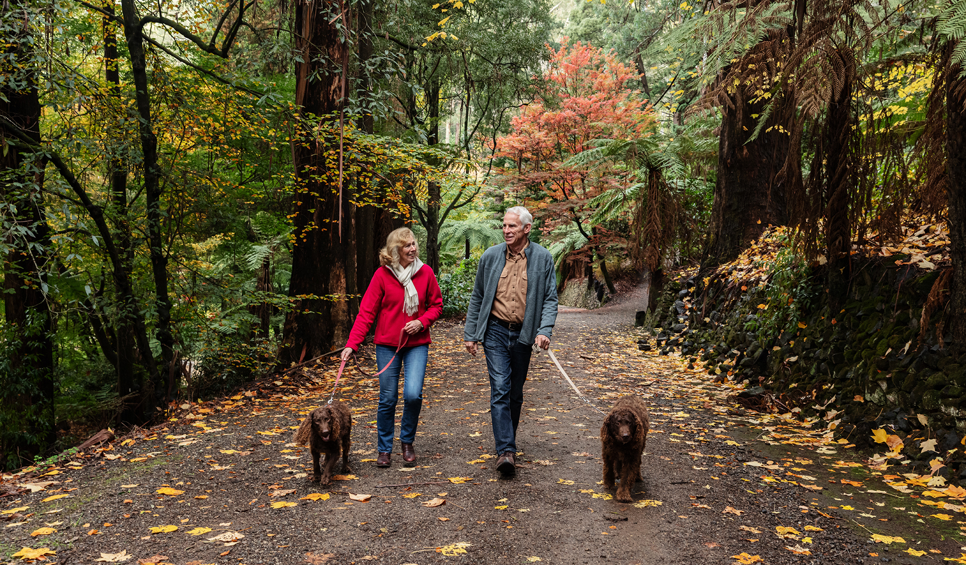 Couple walking with dogs on lead along a garden path with autumn leaves.