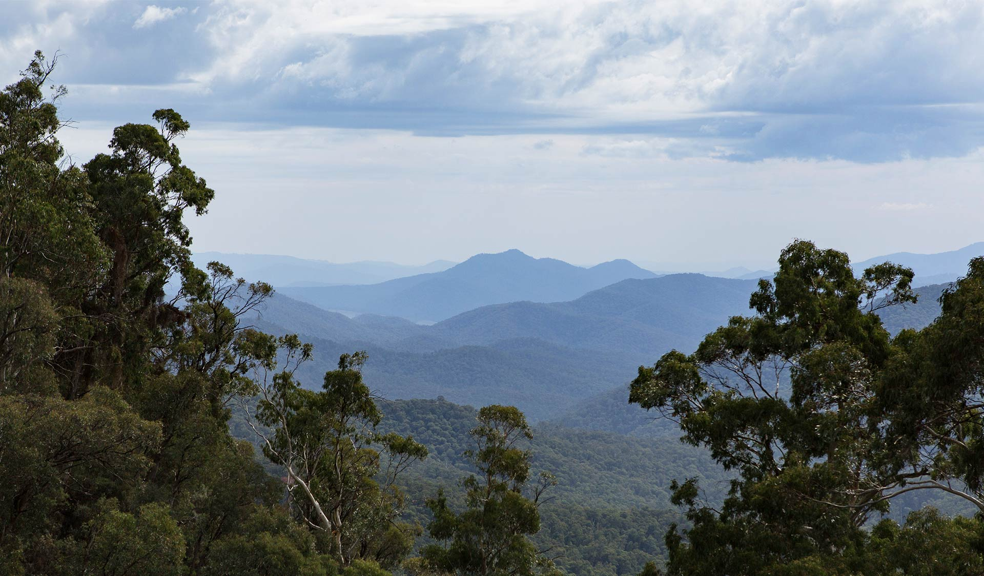 The view of Mt Buffalo from the summit of Mt Cobbler near the headwaters of the Dandongadale River.
