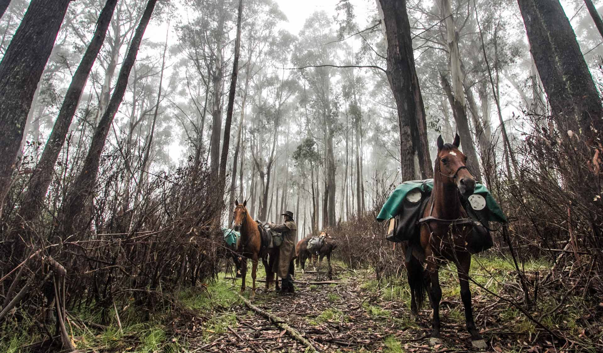 A man wearing a driza-bone jacket adjusts the saddle of his horse in a forest in the Alpine National Park.