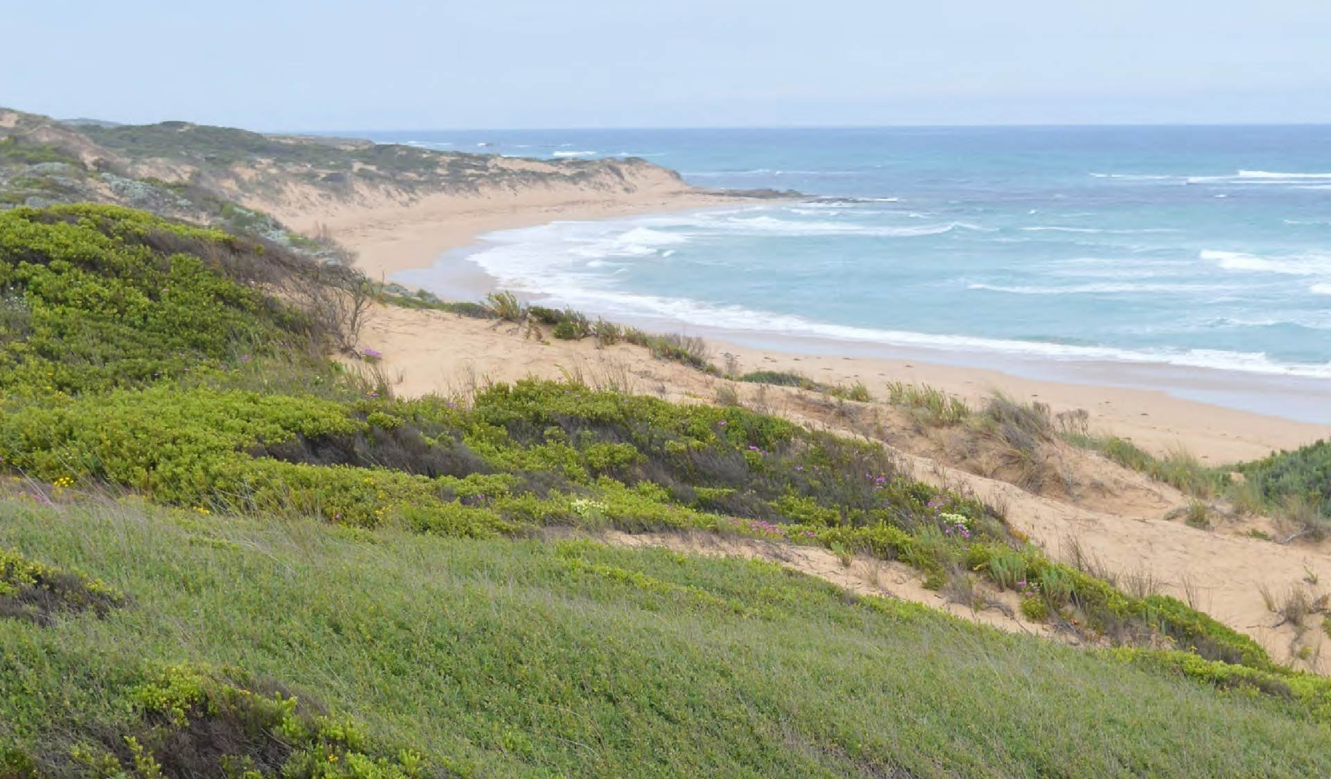 Grass covered dunes in front of a sweeping bay beach