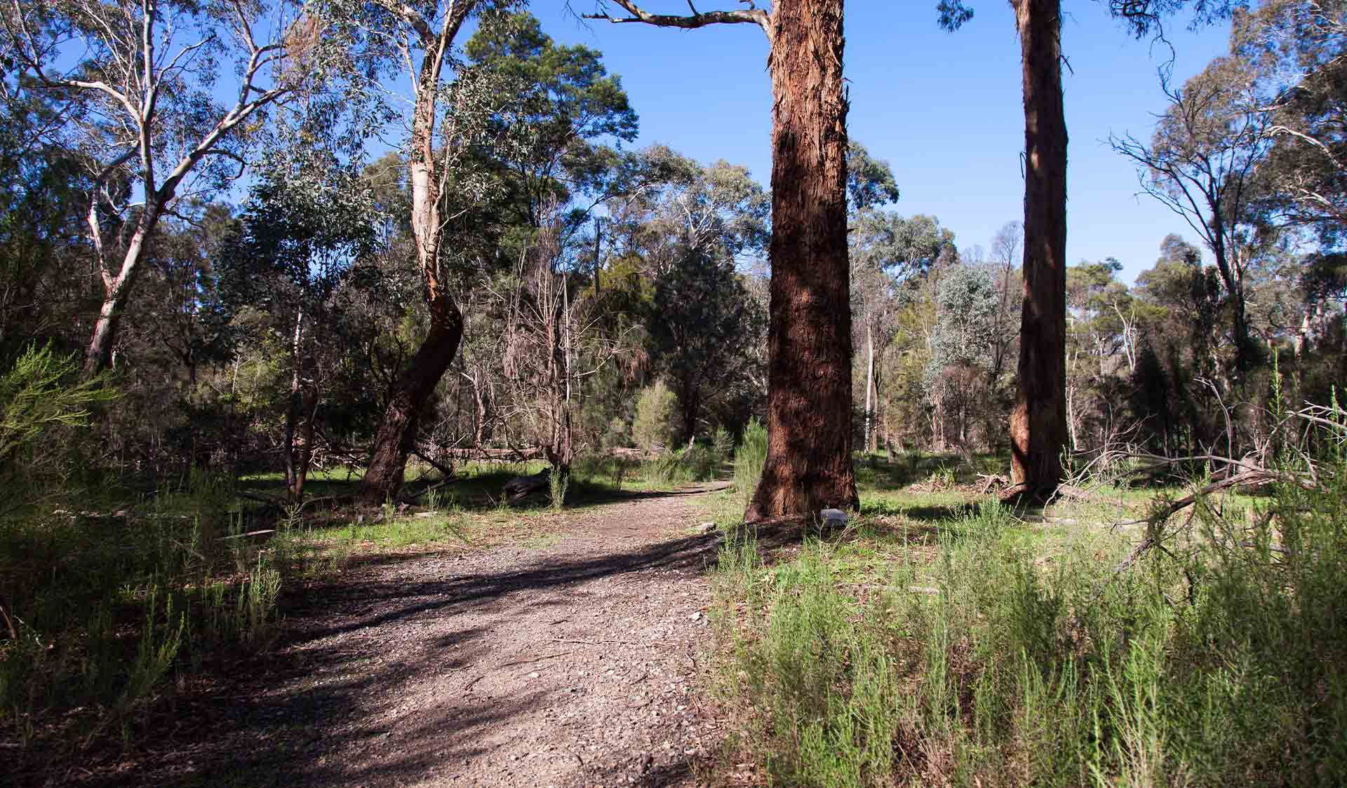 Woodlands Walk nature trail near the Brady Road Picnic Area at Dandenong Police Paddocks Reserve