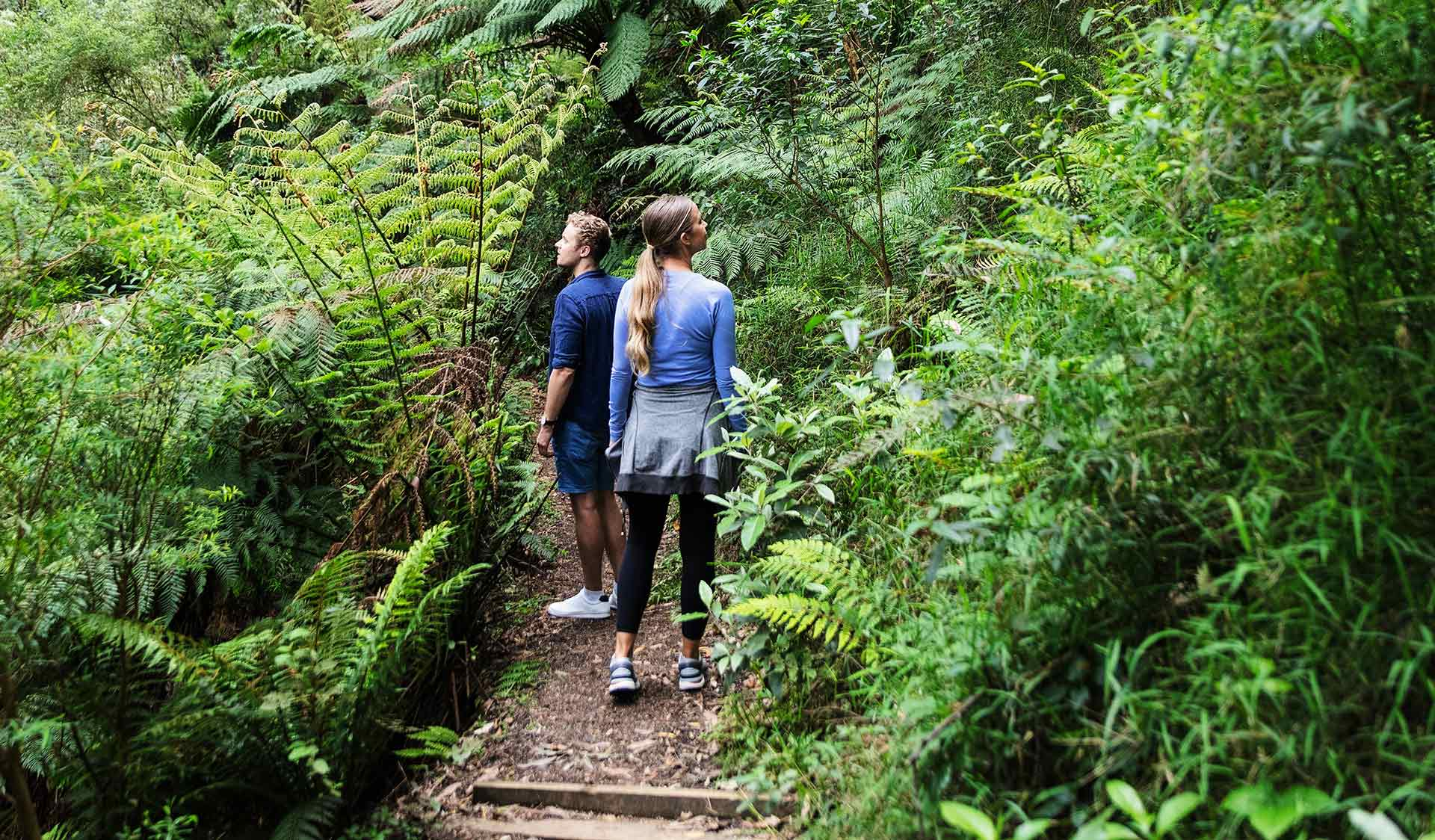 A couple follow a walking path through luscious rain-forest ferns.