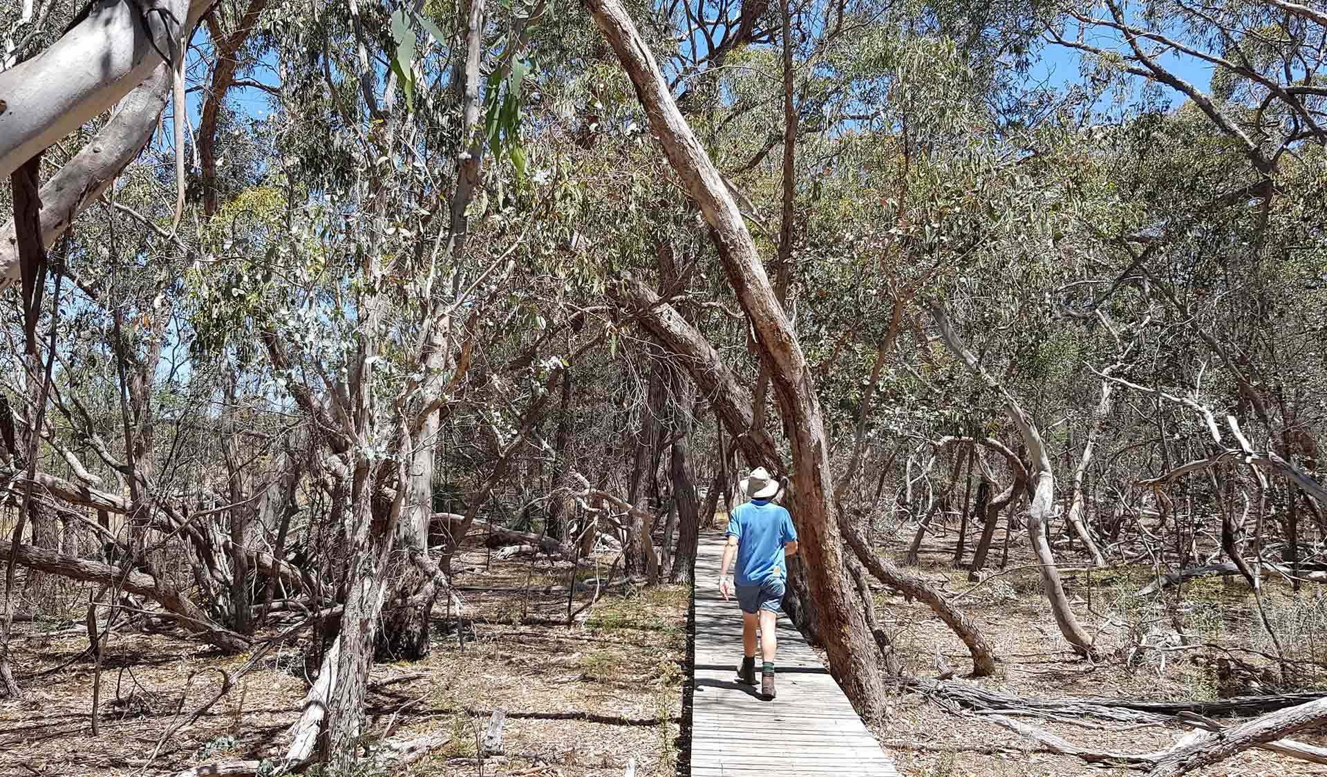 A boardwalk in the Warby-Ovens National Park