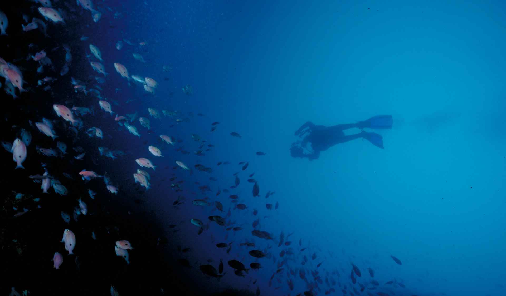 A diver takes a photo a school of fish in the Wilsons Promontory Marine National Park.
