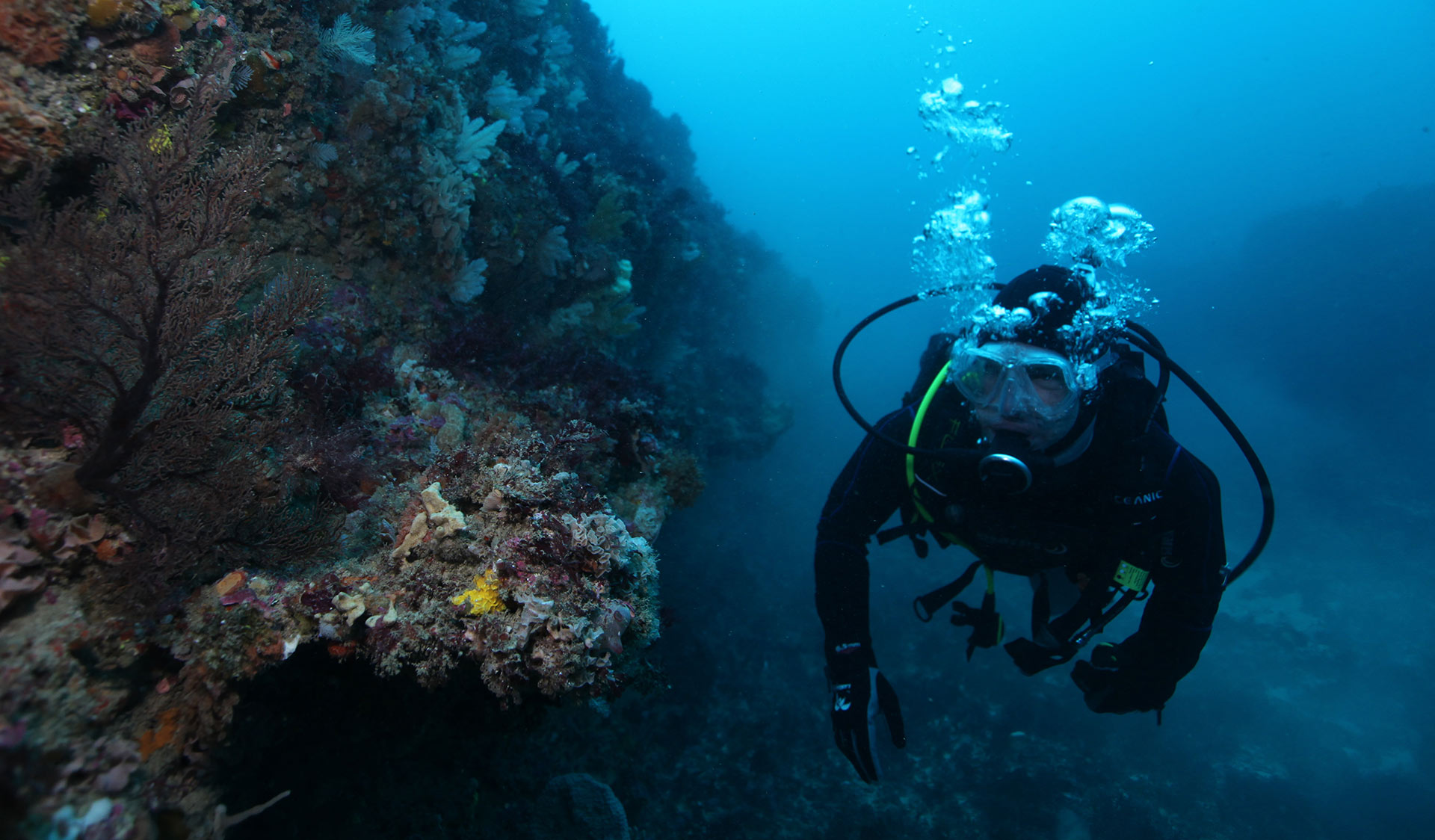A diver explores a coral reef in the Twelve Apostles Marine National Park.