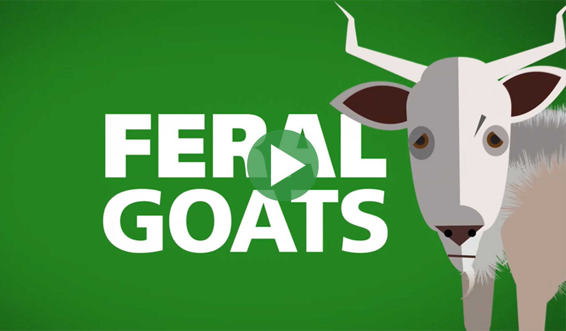Image still from Feral goats in Victoria video, with play icon overlay.