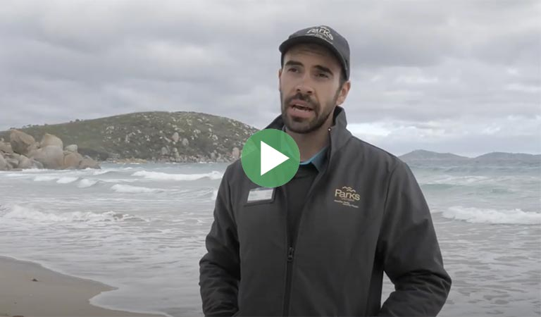 Meet Ranger Luke at Wilsons Promontory National Park