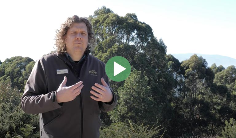 Meet Ranger Tex at the Dandenong Ranges Botanic Garden